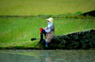 A Japanese farmer on the fields