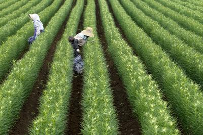 Japan's new agricultural policy plan neglects trade liberalisation