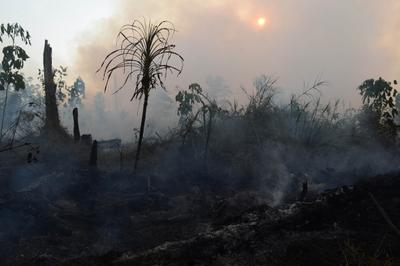 Indonesia's fires: a hazy challenge for Southeast Asia