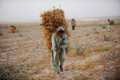 Afghanistan needs jobs — Japan can help create them