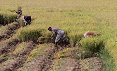 Beyond Bali: imperatives for reforming India's food security system