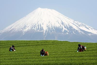 Can Abe's third arrow pierce Japan's agricultural armour?