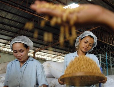 Cambodian workers clean soya beans at a soya milk factory (Photo: AAP)