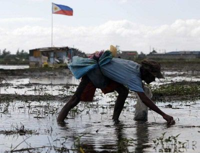 A Filipino farmer removes grass at a field in Taguig City, south of Manila, Philippines, 19 January 2016. (Photo: AAP).
