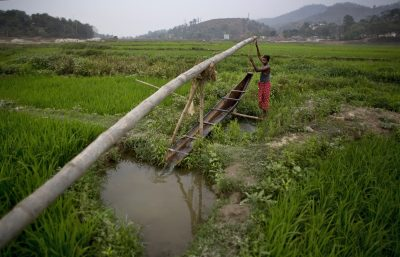 35 year old Indian farmer Niren Das manually irrigates his paddy field on the outskirts of Gauhati, India. About 60 per cent of India's population works in the agriculture sector. (Photo: AAP).