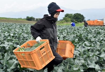 Workers from Thailand work at Green Leaf farm in Showa Village, Gunma Prefecture, Japan, 6 June 2018 (Photo: Reuters/Malcolm Foster).