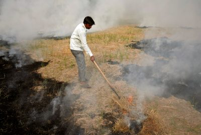 A farmer burns paddy wastestubblein a field on the outskirts of Ahmedabad,India, 6 November 6 2019 (Photo: Reuters/Amit Dave).