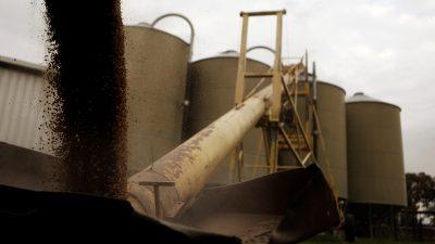 Silos are loaded with barley in a farm near Gunnedah, 275 miles (443 km) northwest of Sydney, 4 July 2011 (Photo: Reuters/Daniel Munoz).