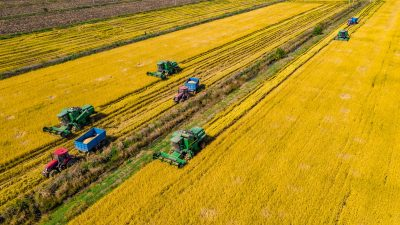 Hongze Lake Farm adopts large-scale agricultural machinery for rice harvesting and transportation in Sihong county, Suqian city, east China's Jiangsu province, 23 October 2020 (Photo: Reuters).